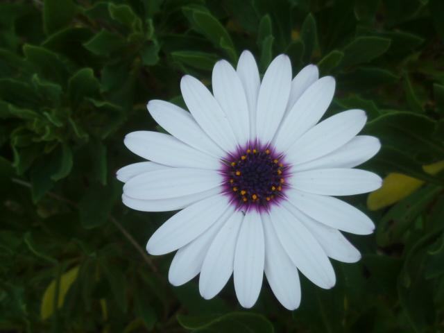 Brumes de fleurs - Page 3 Florai14