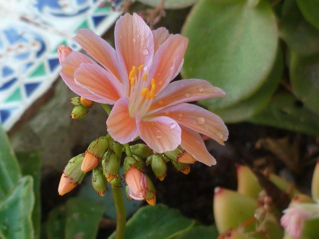Panier fraîcheur Florai18