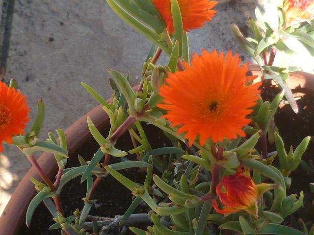 Au jardin, l'an neuf !! - Page 2 Florai24