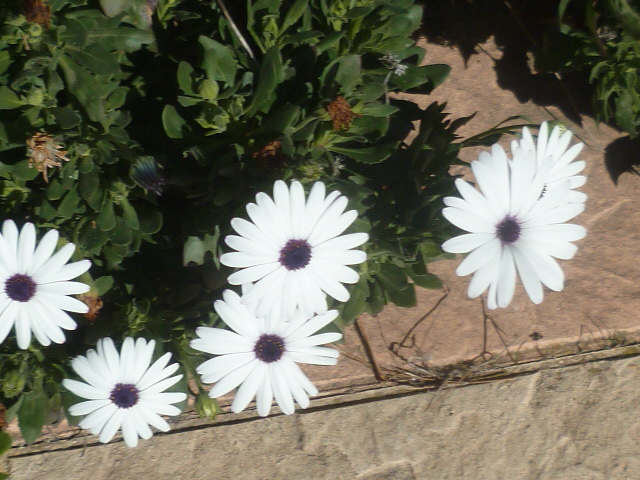 Au jardin, l'an neuf !! - Page 2 Florai25