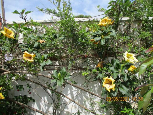 Douceurs jardinières Florai32