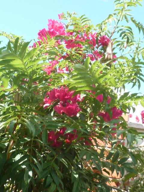 chaleureuses floraisons - Page 2 Gecko_19