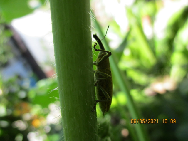 Identification insecte Insect20