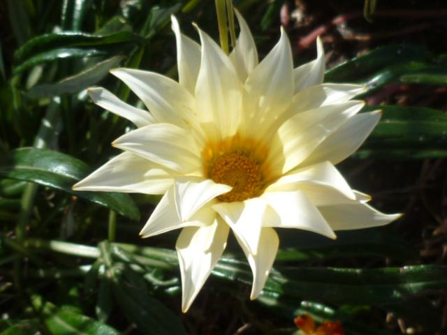 jardins (de) givrés Iris_011