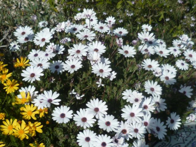 jardins (de) givrés Iris_013