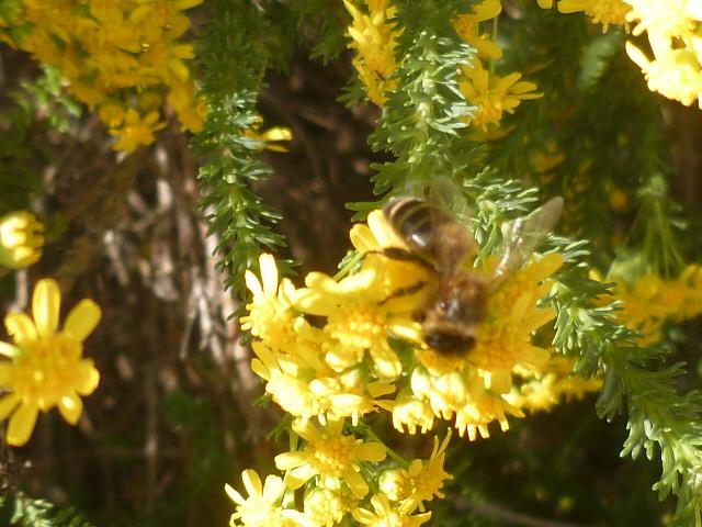 plantes mellifères : les meilleures plantes à insectes de vos jardins  - Page 2 Mante_13