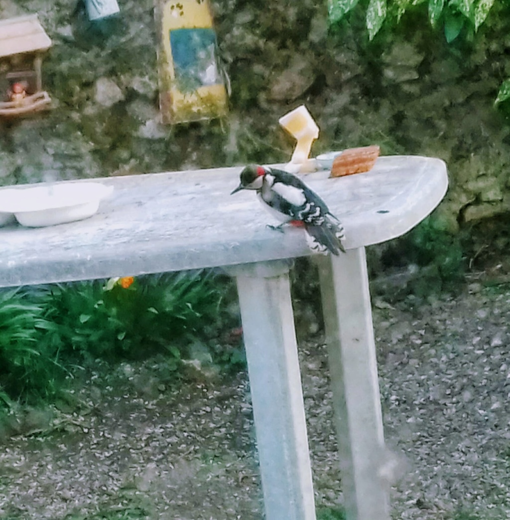 les visiteurs à plumes sauvages - 3 - Page 5 Narbon10