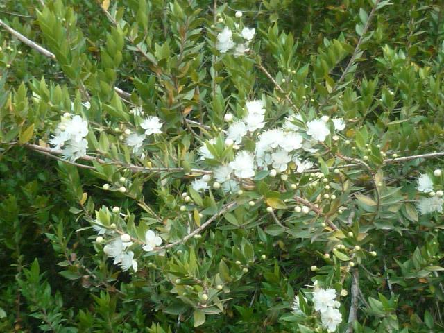 Espagne - flore de la région d'Alicante - Page 3 P1100534