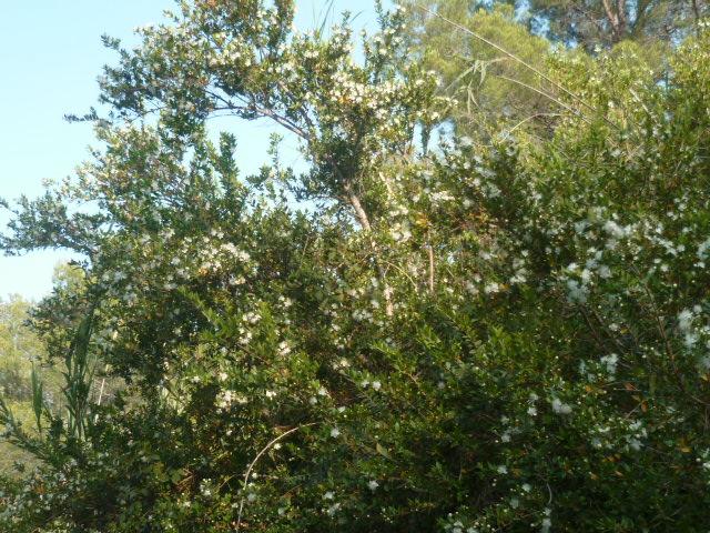 Espagne - flore de la région d'Alicante - Page 3 P1100535