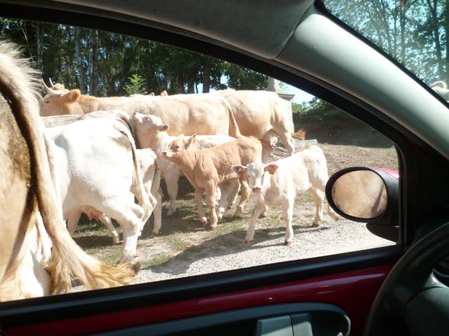 (23) Balade en Limousin P1100812