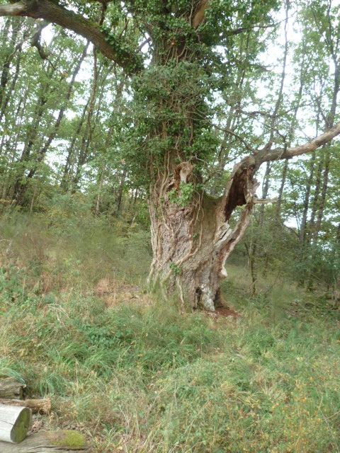 (23) Balade en Limousin P1100813