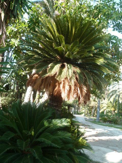 (Espagne) Palmeraie d'Alicante Parc_122