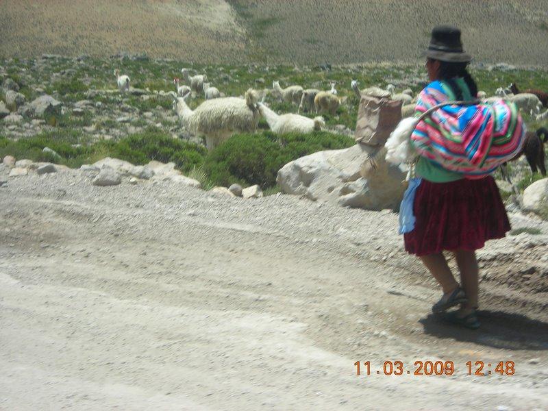 Pérou Perou_13