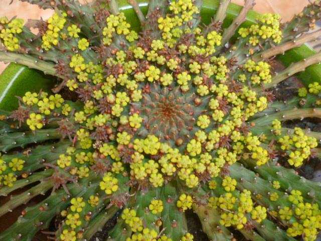 brassées fleuries - Page 3 Plante11
