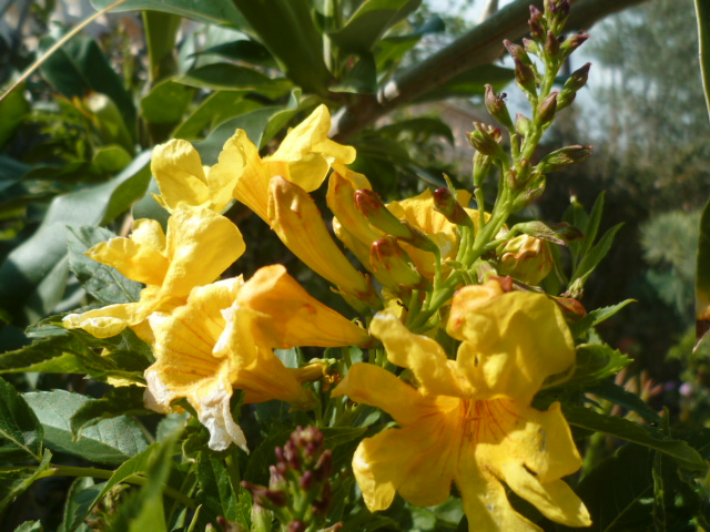 Brassées fleuries - Page 2 Soland12
