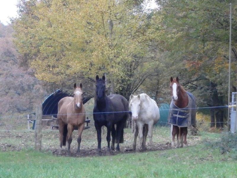 VENUS - ONC poney née en 1987 - adoptée en octobre 2012 par souris73 - Page 7 14521510