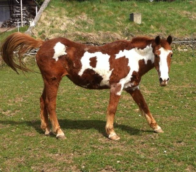 WALANIE (VANILLE) - ONC poney - adoptée en avril 2011 par voulk  - Page 6 13937310