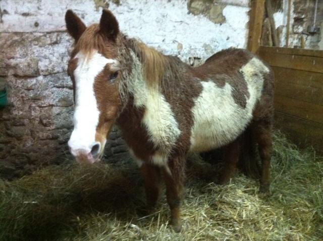 WALANIE (VANILLE) - ONC poney - adoptée en avril 2011 par voulk  - Page 6 14892510