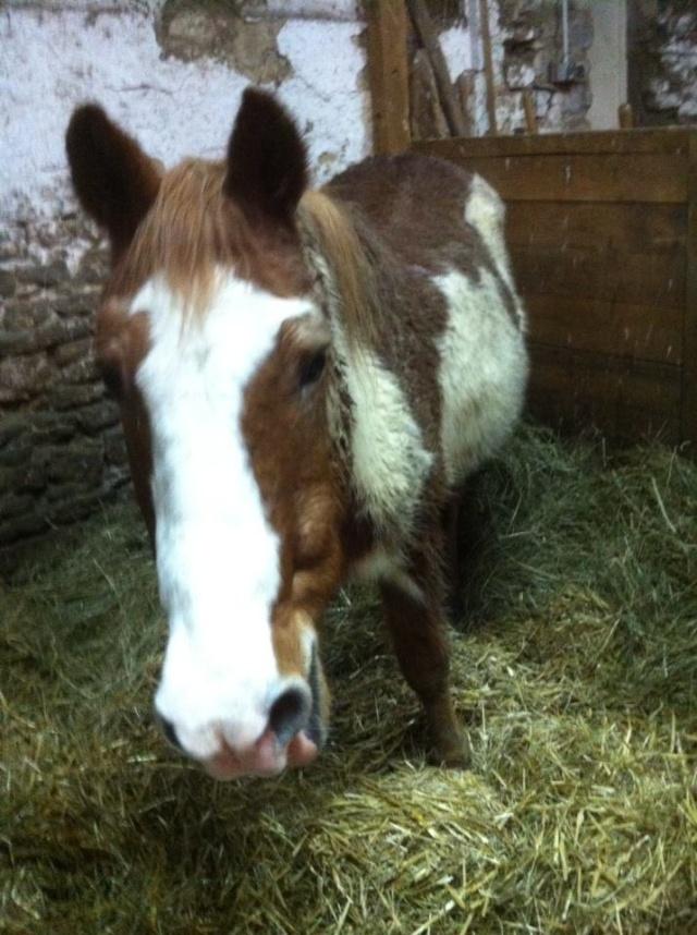 WALANIE (VANILLE) - ONC poney - adoptée en avril 2011 par voulk  - Page 6 15246910