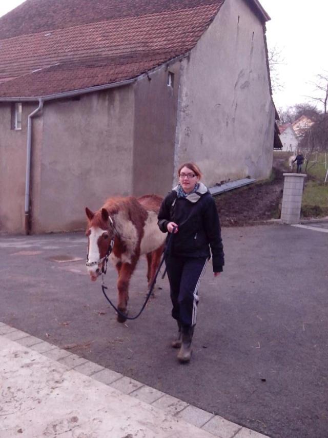 WALANIE (VANILLE) - ONC poney - adoptée en avril 2011 par voulk  - Page 6 16219510
