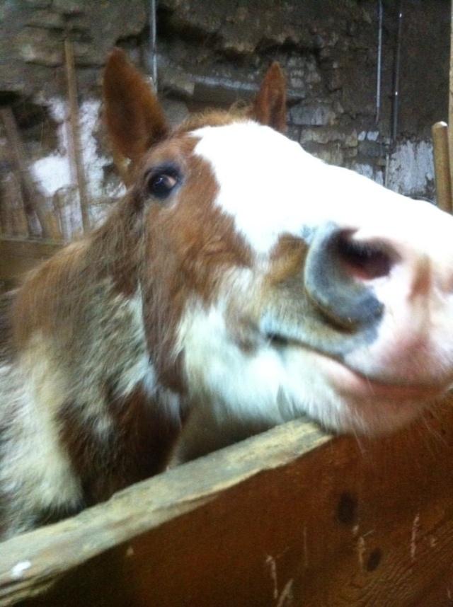 WALANIE (VANILLE) - ONC poney - adoptée en avril 2011 par voulk  - Page 6 66794_10