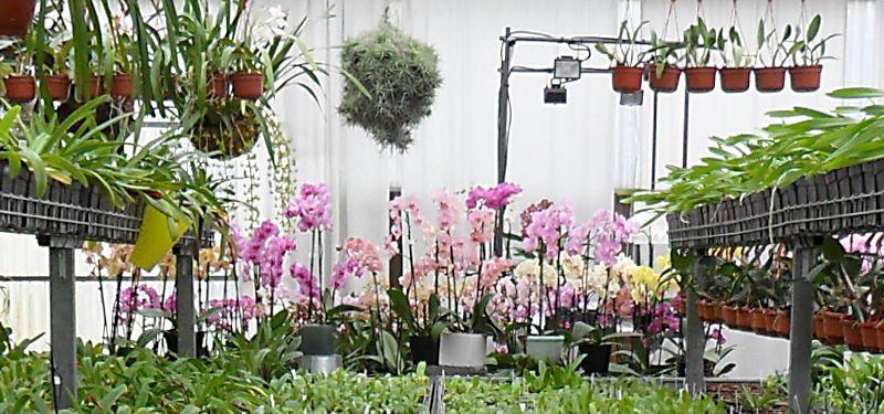 """Balade à """" La Cour des Orchidées """" à Gometz le Chatel en région parisienne Gometz11"""