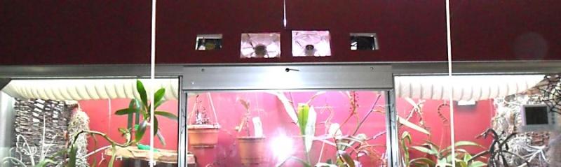 Ma première serre adossée dans mon salon Mancho10