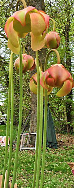 Fête des plantes en région parisienne du 4 au 6 avril 2014, St Jean de Beauregard 91  St_jea11