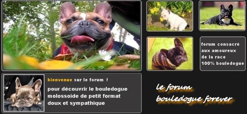 Bouledogue Forever Le Forum Du Bouledogue Français Baaaaa10