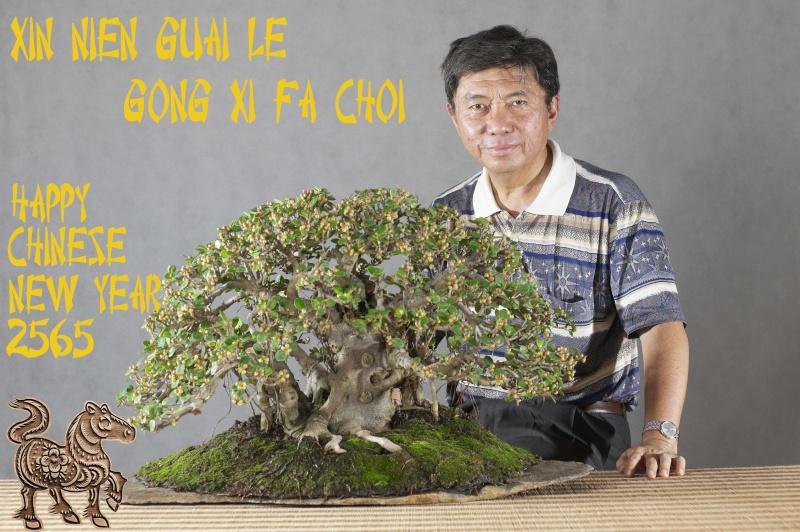 Ficus longisland 0410
