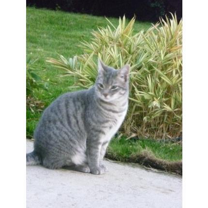 Perdu OGGY chat gris clair à JANZE (novembre 2013) 10435910