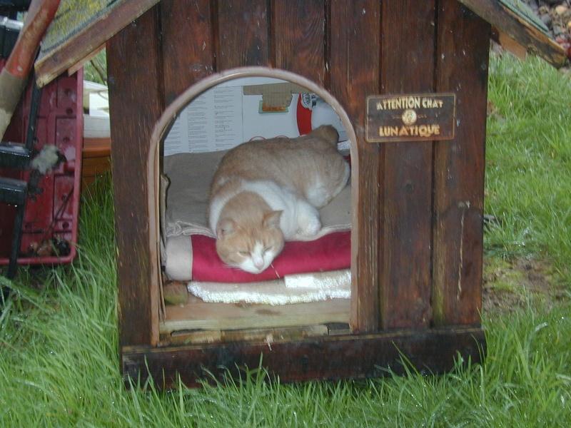 ABRIS DE FORTUNE pour chats nomades Bayard12
