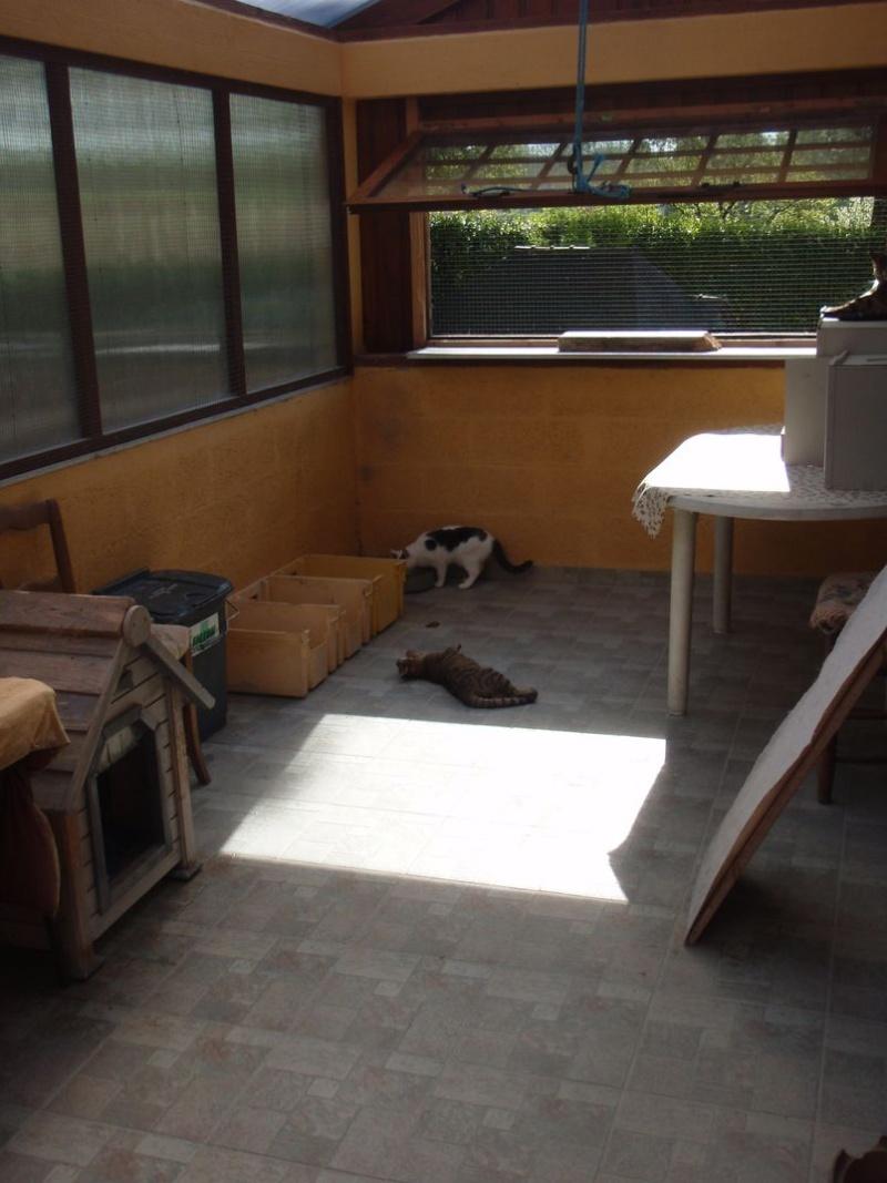 ABRIS DE FORTUNE pour chats nomades Oasis_10