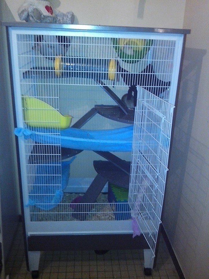 Ma nouvelle cage 15263810