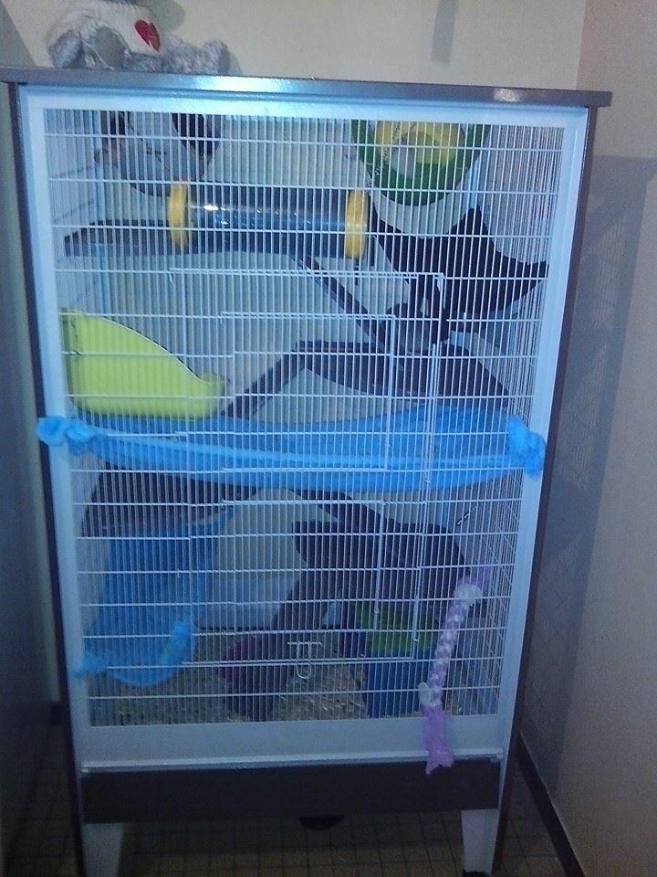 Ma nouvelle cage 15287410