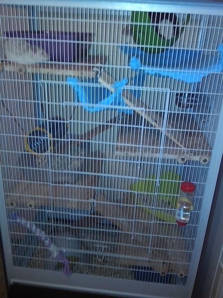 Ma nouvelle cage 55509010