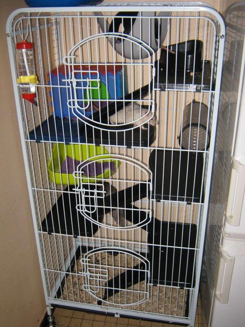 La maison de mes ratoux - Page 2 Cage_s10