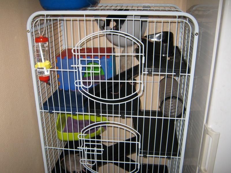 La maison de mes ratoux - Page 2 Cage_s11