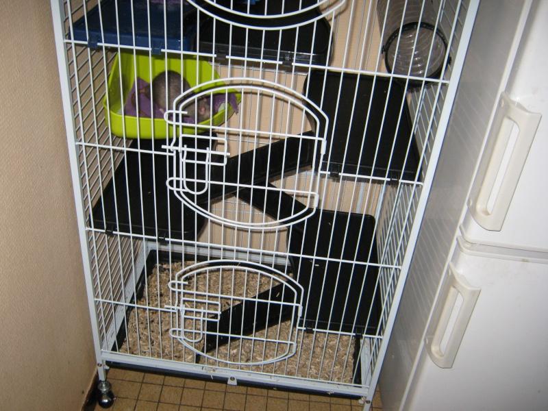 La maison de mes ratoux - Page 2 Cage_s12