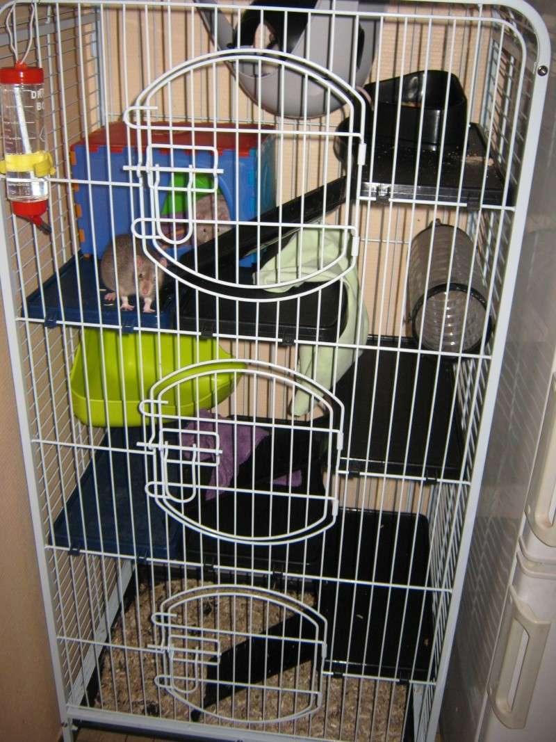 La maison de mes ratoux - Page 2 Cage_s13