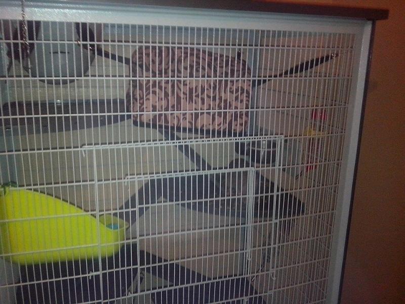 Ma nouvelle cage Maison12