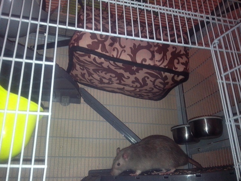 Ma nouvelle cage Maison13