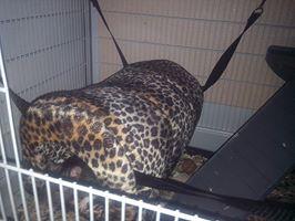 Ma nouvelle cage Maison14