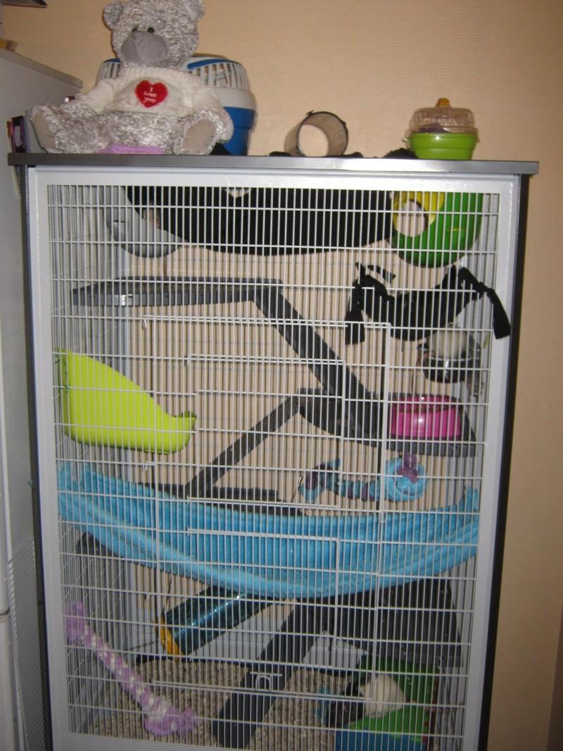 Ma nouvelle cage Photo_10