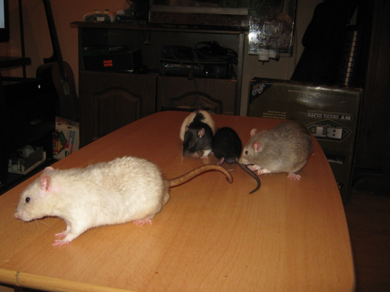 Mes z'amours Rencon12