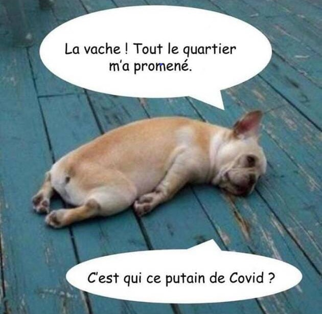 BILLET D'HUMOUR !!!  - Page 3 Covid10