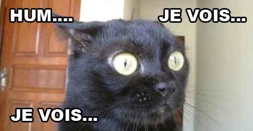 humour en image Chat_v10