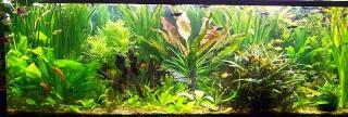 Forum aquarium eau douce...Cliques ICI pour découvrir tous les sujets...