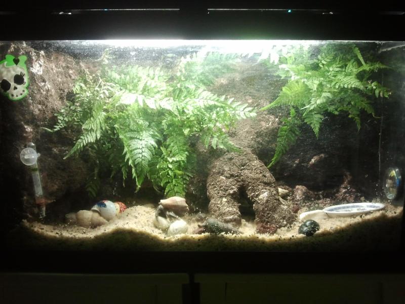 Gros projet Aqua-terrarium pour dendrobates - Page 4 Photo010