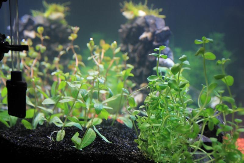 [54L] Création de mon premier bac | Etape 2: Choix des plantes et du décors - Page 2 4_e-pl10